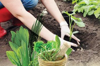social botanical nursery occupation for housewives