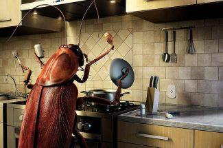 roach-pest