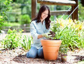 गार्डन के लिए प्राकृतिक खाद
