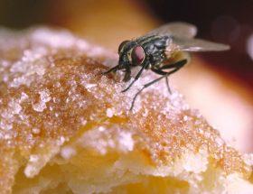 मक्खियों से निजात पाने के घरेलू तरीके