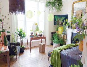 पौधे जो रखें घर को प्रदूषण मुक्त