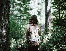 कहीं मुसीबत न बन जाए जंगल की सैर