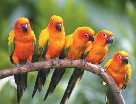 अबकी बार छुट्टियों में जाएं पक्षी अभयारण्य और जमकर उठाएं लुत्फ
