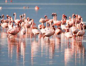 प्राकृतिक सौंदर्य की अनमोल धरोहर ओडिशा