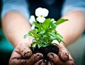 बागबानी के ये भी हैं फायदे