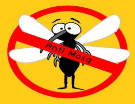 इन पौधों से मच्छरों की घर में 'नो एंट्री'