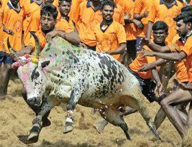 जल्लीकट्टू : पशुओं को सताना इंसानियत नहीं