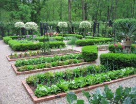 किचन गार्डन में जरूर लगाएं ये पौधे