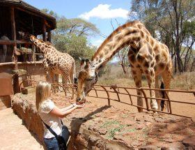 नैरोबी जहां पर्यटक वन्य जीवों को देखने जाते हैं