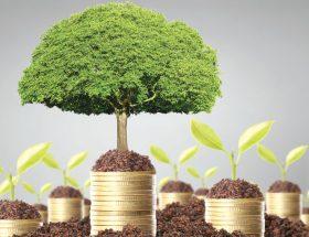 रुपयों का पेड़ उगायें