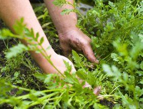 जब हटाना हो बगीचे के बीच से घास-फूस